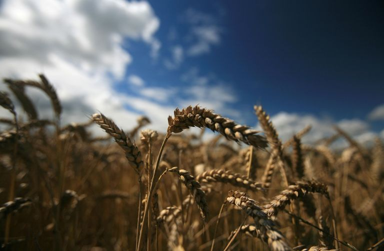 Global Food Supplies: Slow Increases vs. a Single Breakthrough