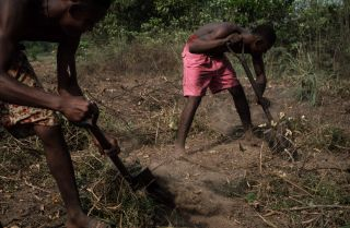 Workers clear land for cassava planting near the village of K-Dere near Bodo, part of the Niger Delta region in Nigeria.