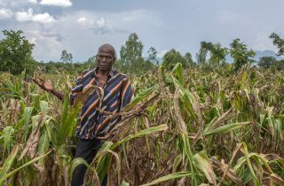 Joseph Kamanga, a farmer in Malawi, surveys the damage that drought has inflicted on his corn crops.