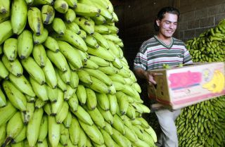 This photo taken in 2006 shows a worker in Honduras carrying a box of bananas in a warehouse.