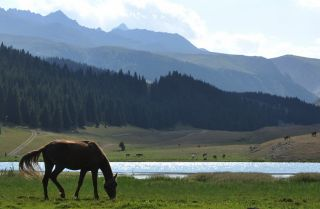 A horse grazes in front of Kara-Kul lake in the Chon-Ak-Suu valley, 300 kilometers southeast of Bishkek, the capital of Kyrgyzstan.