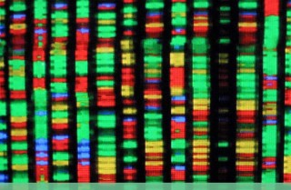 Gene-editing techniques like CRISPR and other technologies, including cloning, would make a significant mark on Chinese agricultural and livestock production. For Beijing, such technological advances are the key to its own security and to winning its competition with the West.