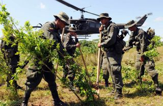 Colombian authorities destroy coca plants at a field in Villagarzon municipality, Putumayo department, on Dec. 16, 2008.