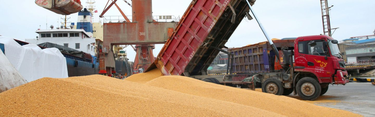 Workers load imported soybeans onto a truck at a port in Nantong in China's eastern Jiangsu province. Chinese soybean stocks are at a 10-year high, which could help China absorb the loss of U.S. imports brought on by tariffs.