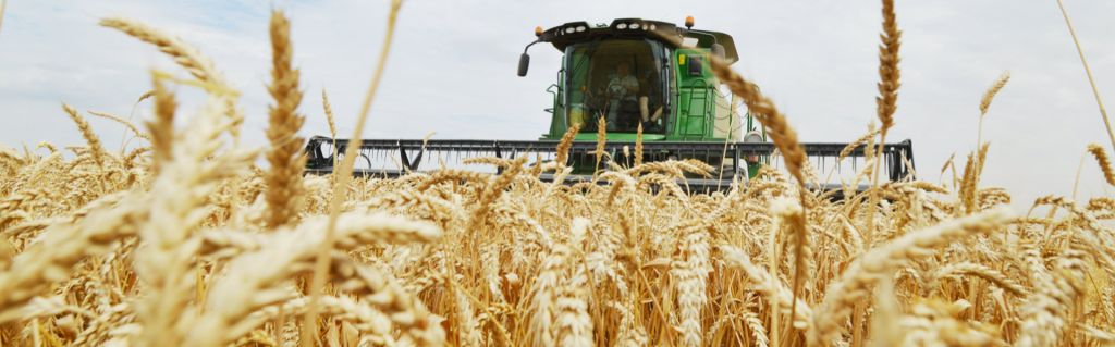 A Blight on the Future of Russian Agriculture?