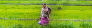 A woman works in the fields of Arunachal Pradesh, a territory India controls but China claims as part of Tibet.