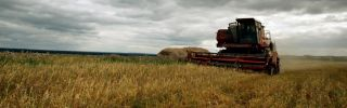 Russian agriculture, especially its wheat production, has provided its economy with trade revenue that goes beyond its reliance on mineral exports.