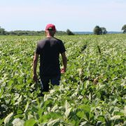 A farmer walks through his soy fields in Harvard, Illinois, on July 6, 2018, the same day that China hit the U.S. soybean market with retaliatory tariffs.