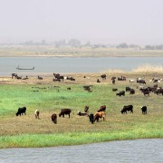 The Niger River Basin: Supporting West Africa's Empires