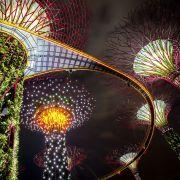 The illuminated Supertree Grove in Singapore