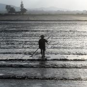 A farmer works in a rice field on the outskirts of the central Vietnamese city of Hue on Jan. 17.